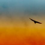 Полет над гнездом кукушки